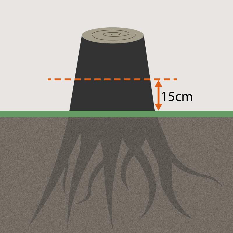 Kapa stubben så den blir maximum 15 centimeter hög